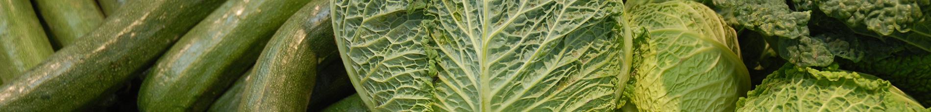Horto-frutícolas